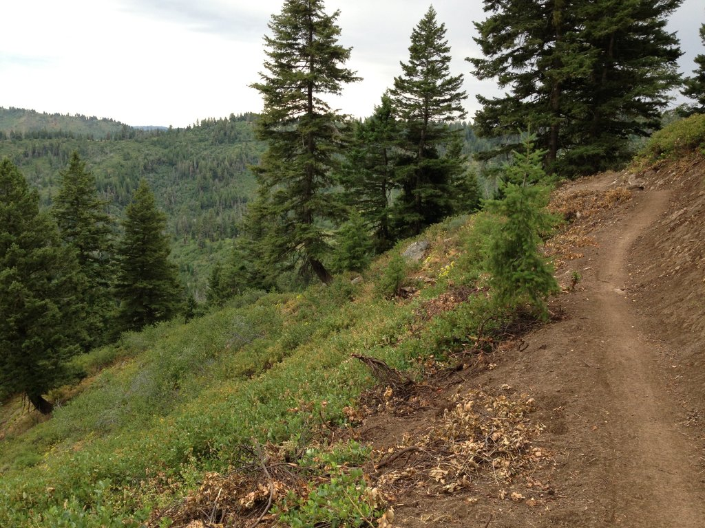New trails coming to Bogus Basin-img_0850.jpg