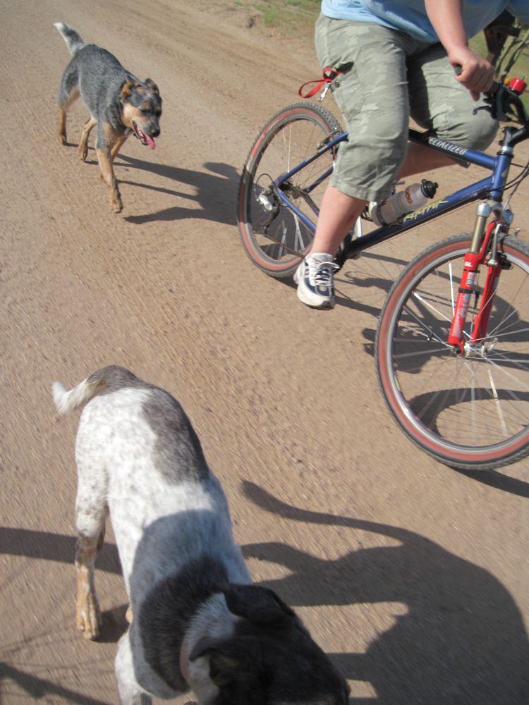 doggie style in NE Scottsdale-img_1000.jpg