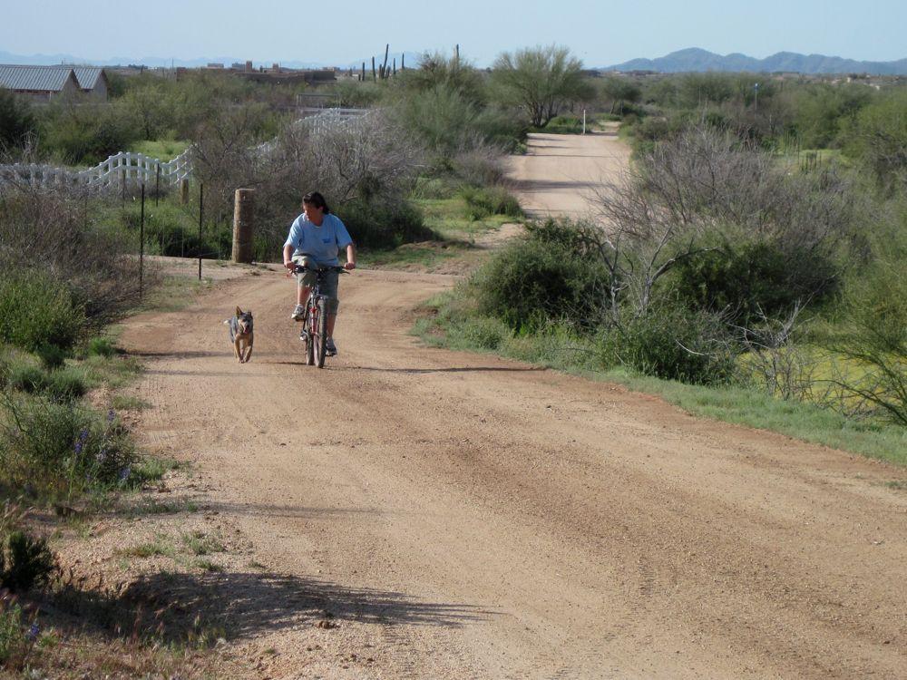 doggie style in NE Scottsdale-img_1020.jpg