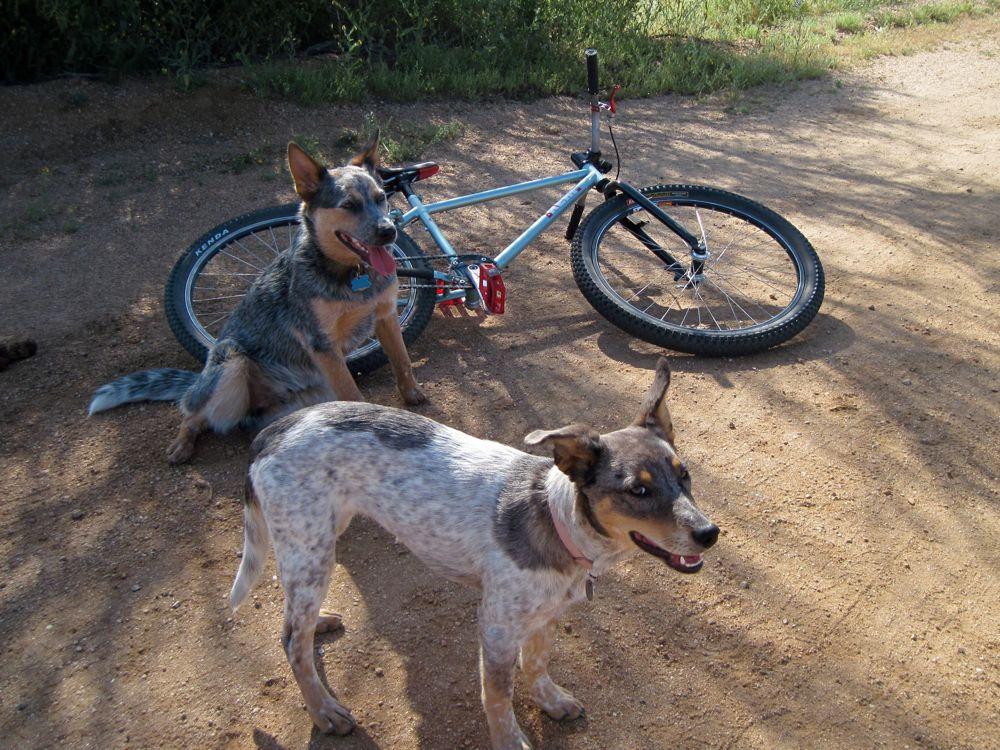 doggie style in NE Scottsdale-img_1025.jpg