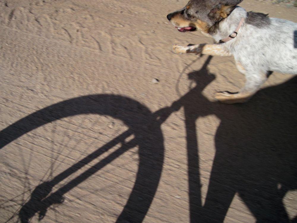 doggie style in NE Scottsdale-img_1036.jpg