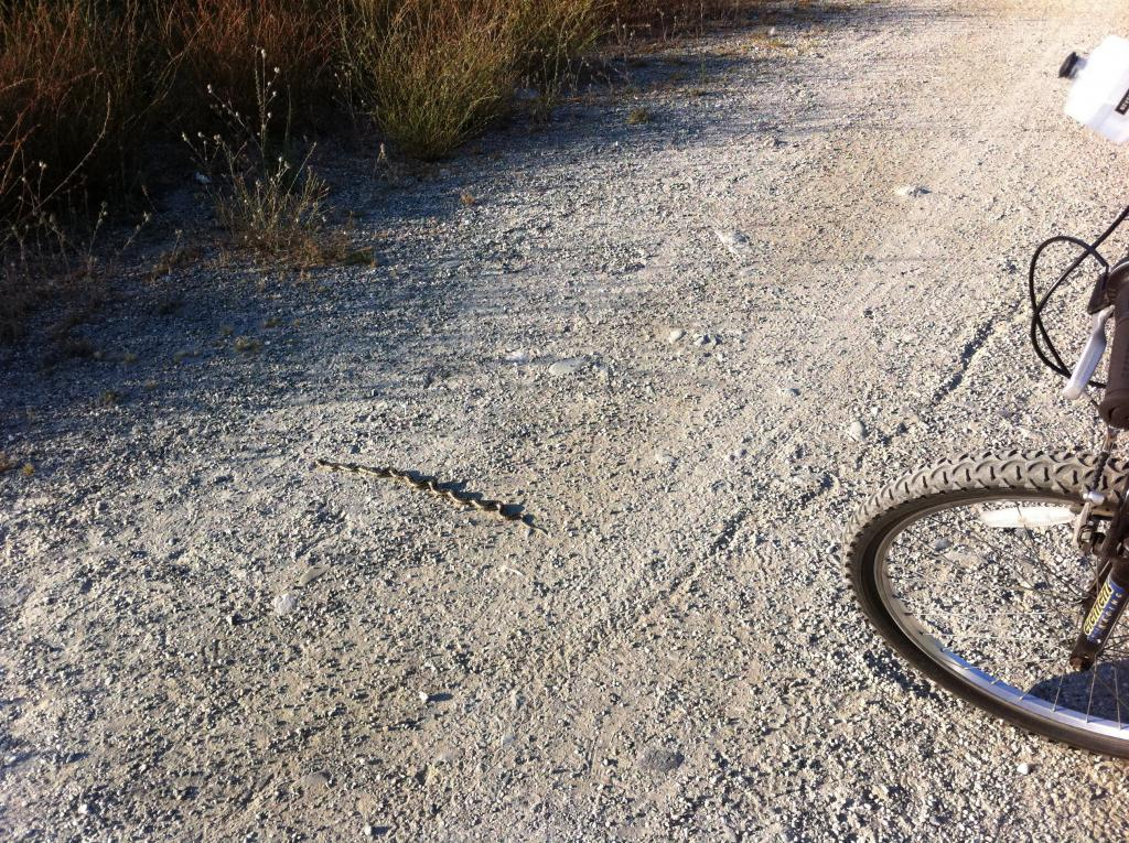 Wildlife you have seen on trail...post your pics...-img_1043.jpg