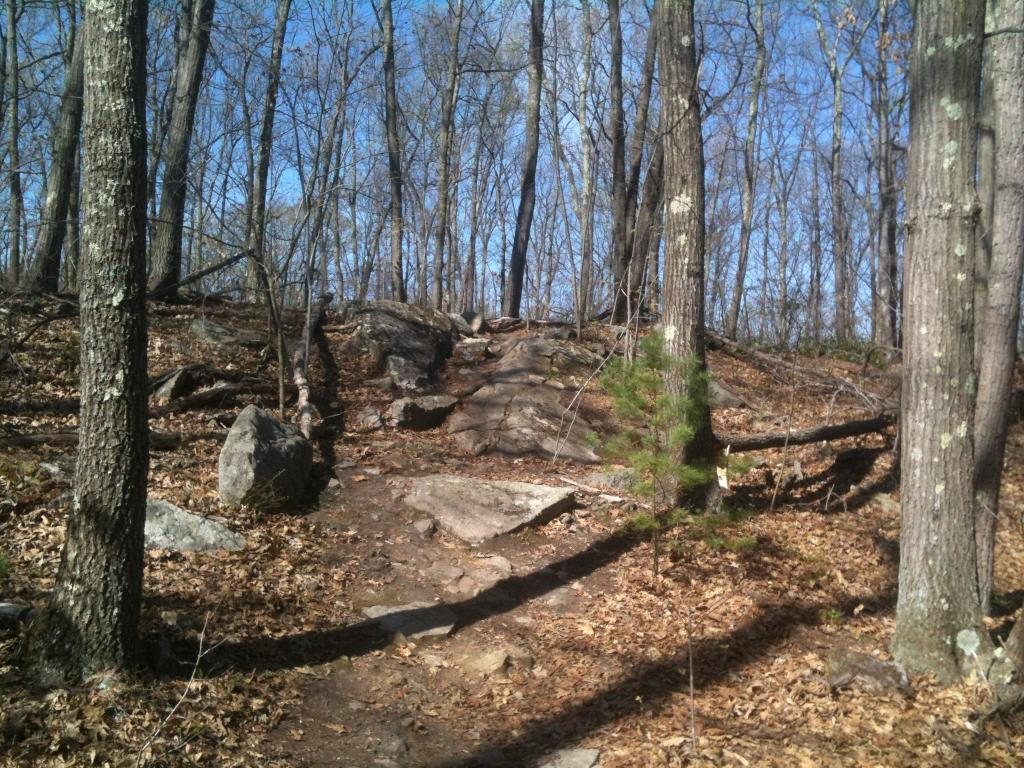 MA Trails Picture Thread-img_1135.jpg