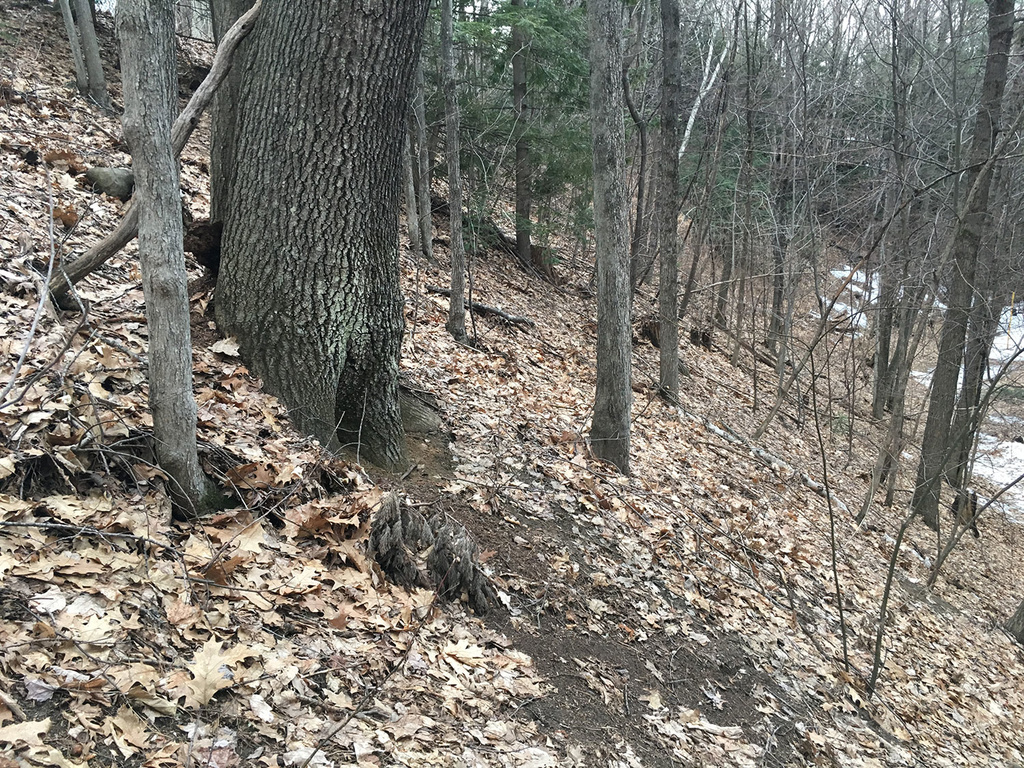 Thinking of building a tiny trail behind my house-img_1177-web.jpg