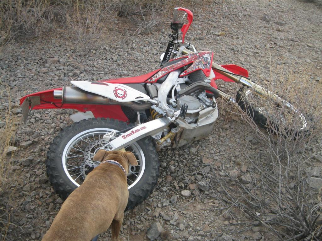 Who's riding today????-img_1210-large-.jpg