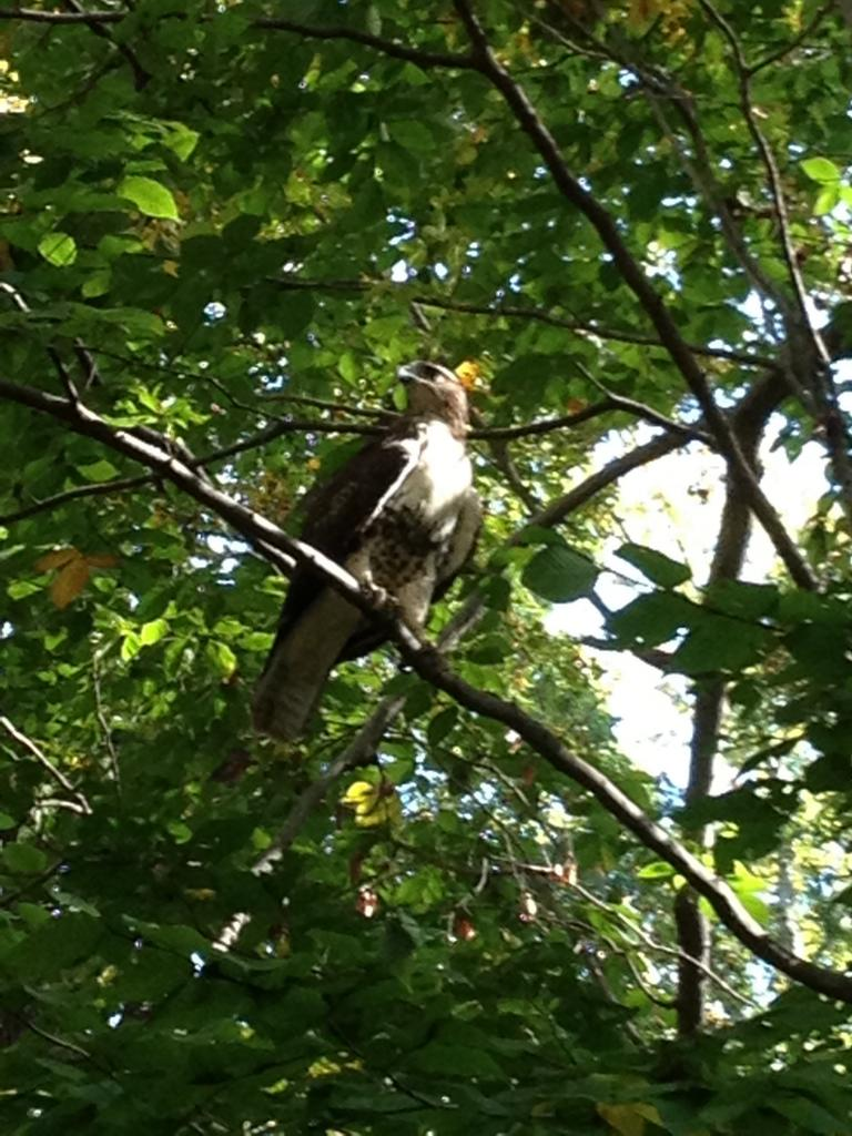 Wildlife you have seen on trail...post your pics...-img_1281.jpg