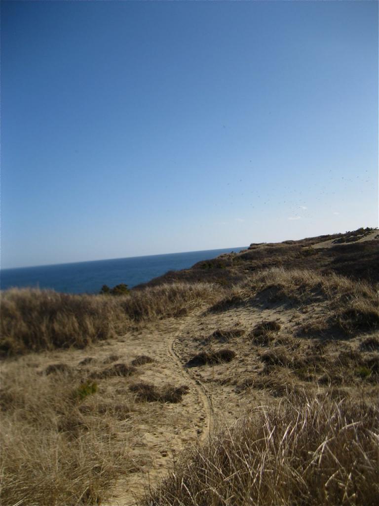 Beach/Sand riding picture thread.-img_1389.jpg