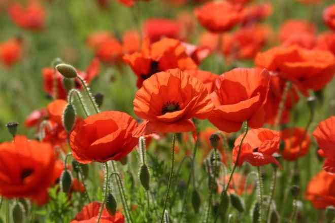 Memorial Day...-img_1562.jpg