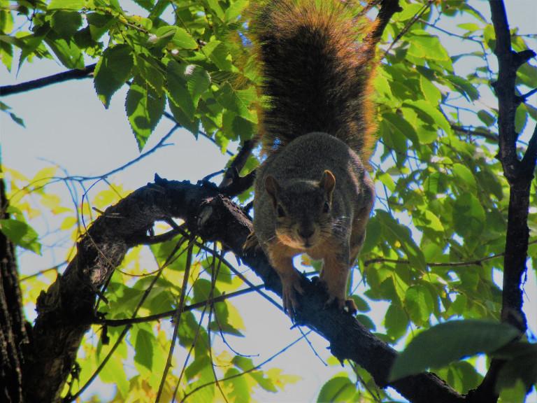 animal encounters-img_1745.jpg