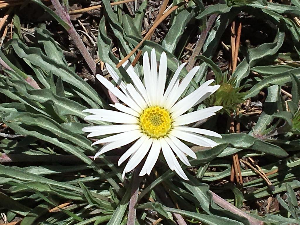 Botany Thread-img_1911.jpg