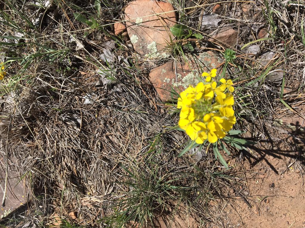 Botany Thread-img_1916.jpg