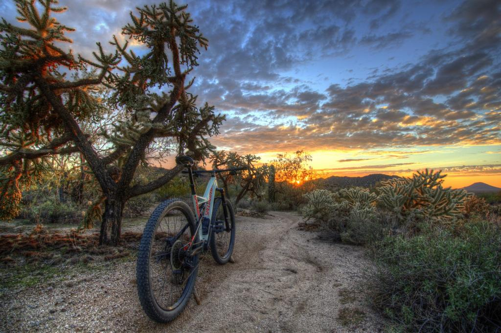 did you ride today?-img_1916_7_8-large-.jpg