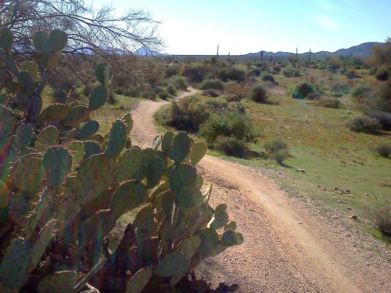 Trail Pics-img_20120101_101534.jpg