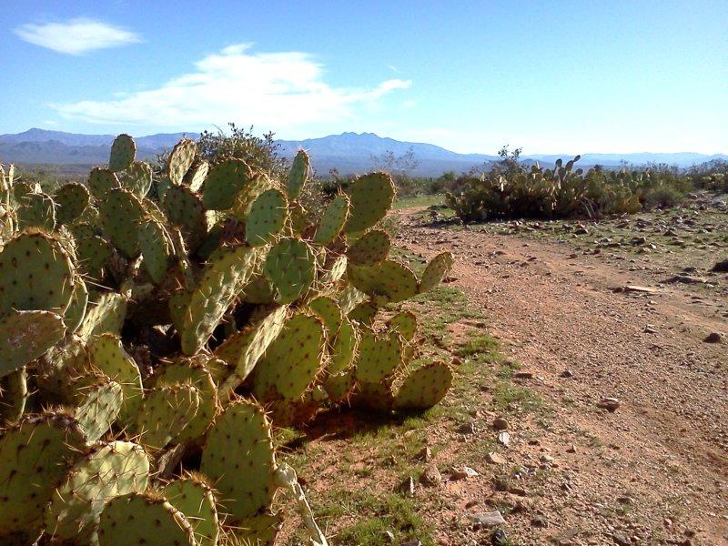 Trail Pics-img_20120101_102329.jpg