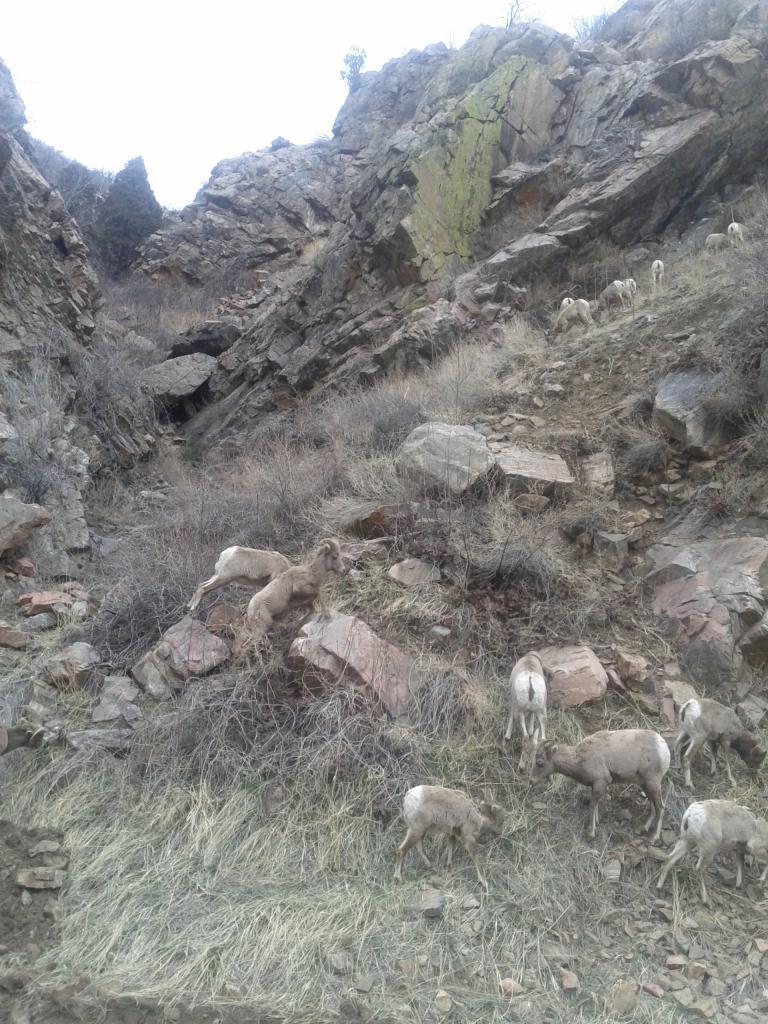 Waterton Canyon-March 1st!!-img_20120301_114305.jpg