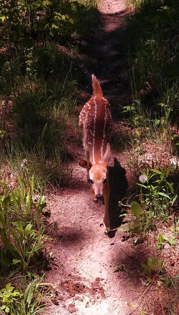 "wild and ferocious animals on the trail..""No, its not Rob Ford""-img_20130525_134648_246.jpg"