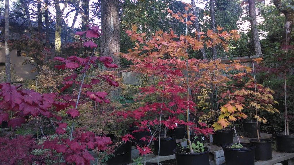 Post Pics of your Fall Foliage!!-img_20131010_170339453.jpg
