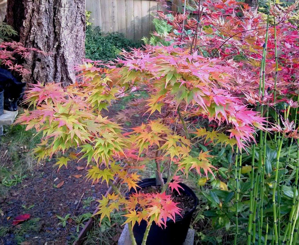 Post Pics of your Fall Foliage!!-img_20131010_235053.jpg