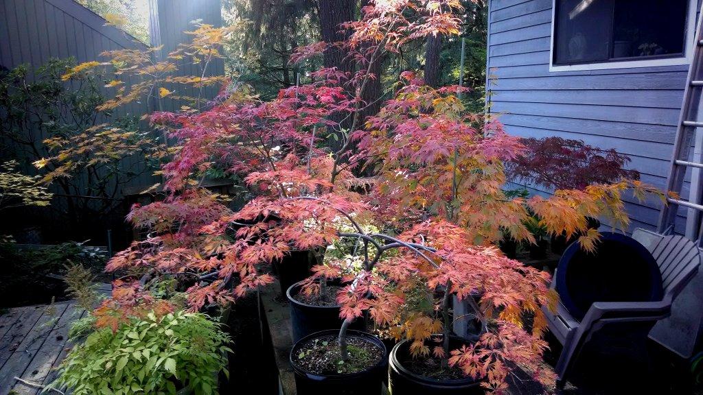 Post Pics of your Fall Foliage!!-img_20131010_235713.jpg