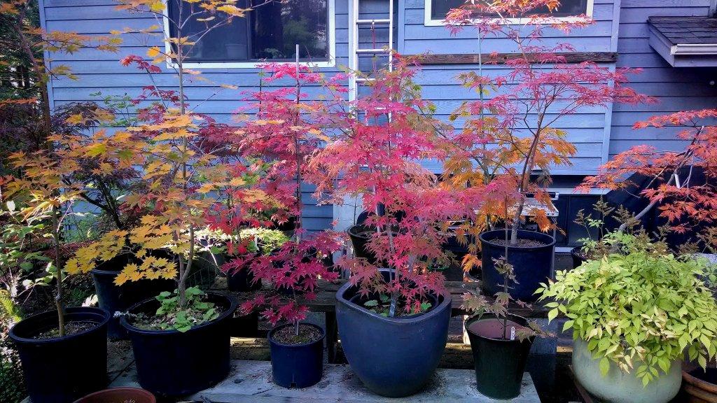 Post Pics of your Fall Foliage!!-img_20131010_235905.jpg