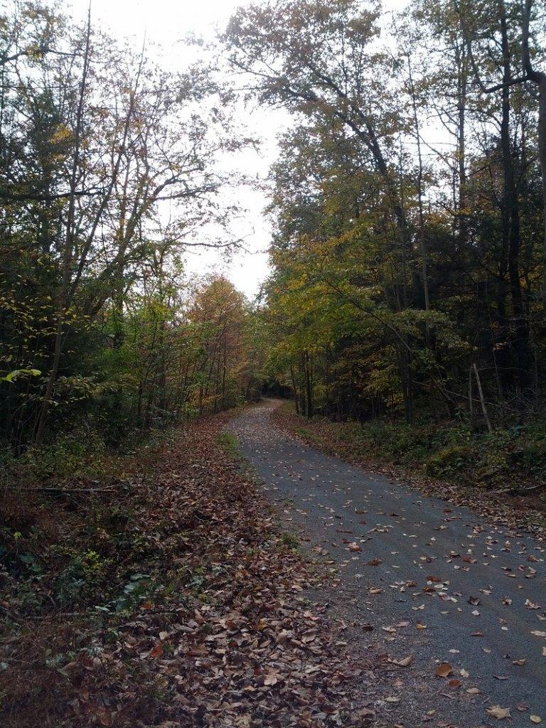Post Pics of your Fall Foliage!!-img_20131015_101539.jpg