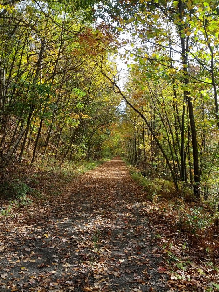 Post Pics of your Fall Foliage!!-img_20131015_111948.jpg