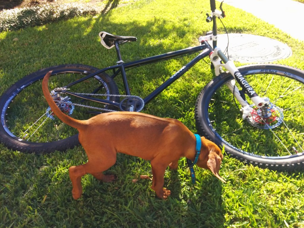 Post your dog with your single speed-img_20140923_163259.jpg