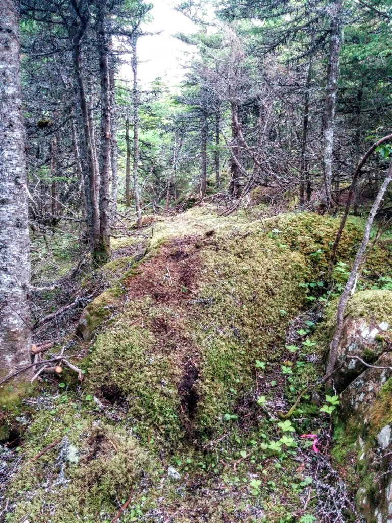 Building trail 2015... tips, tricks and trips-img_20150707_200654.jpg