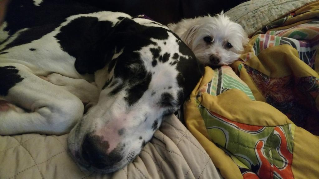 Old dogs ;(-img_20170414_203142403-1600x900.jpg