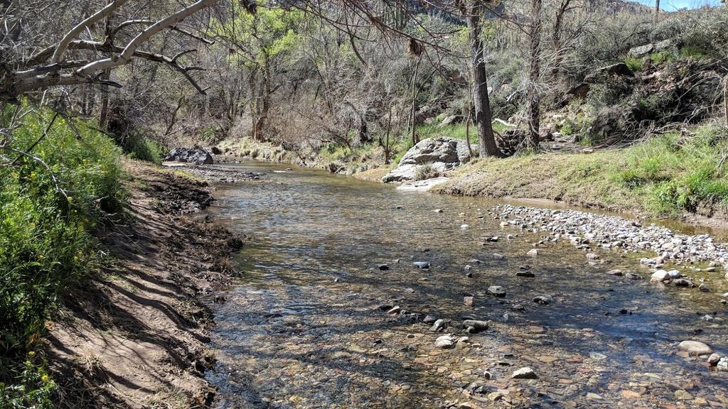Arnett Canyon Trail (Picketpost)-img_20190315_105043.jpg