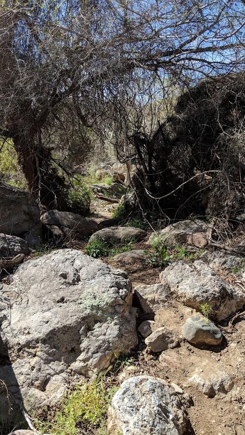 Arnett Canyon Trail (Picketpost)-img_20190315_113037.jpg