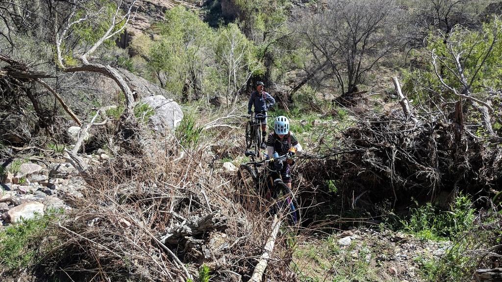 Arnett Canyon Trail (Picketpost)-img_20190315_114216.jpg