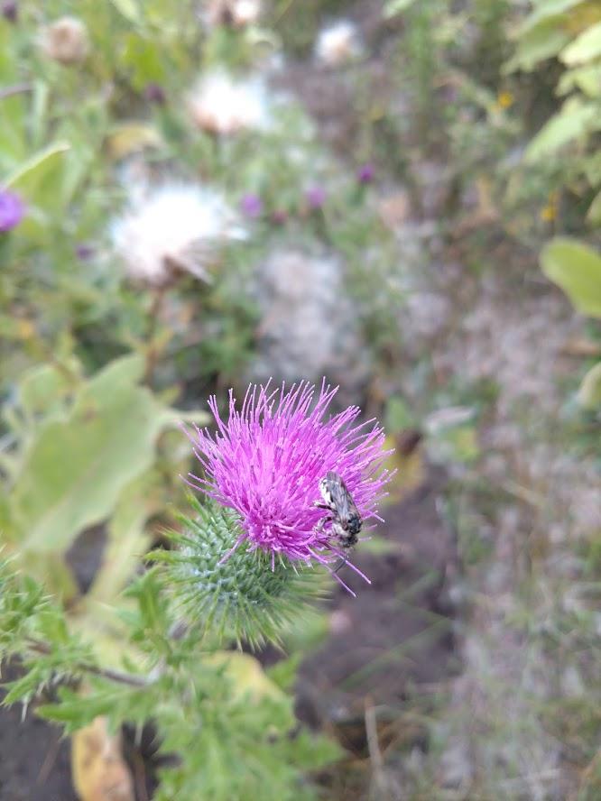 Botany Thread-img_20190914_144838754.jpg