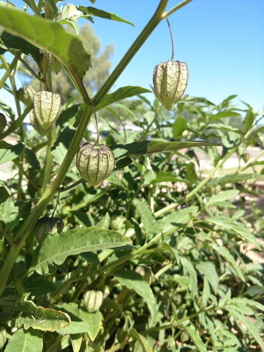 Botany Thread-img_20191001_114450441.jpg