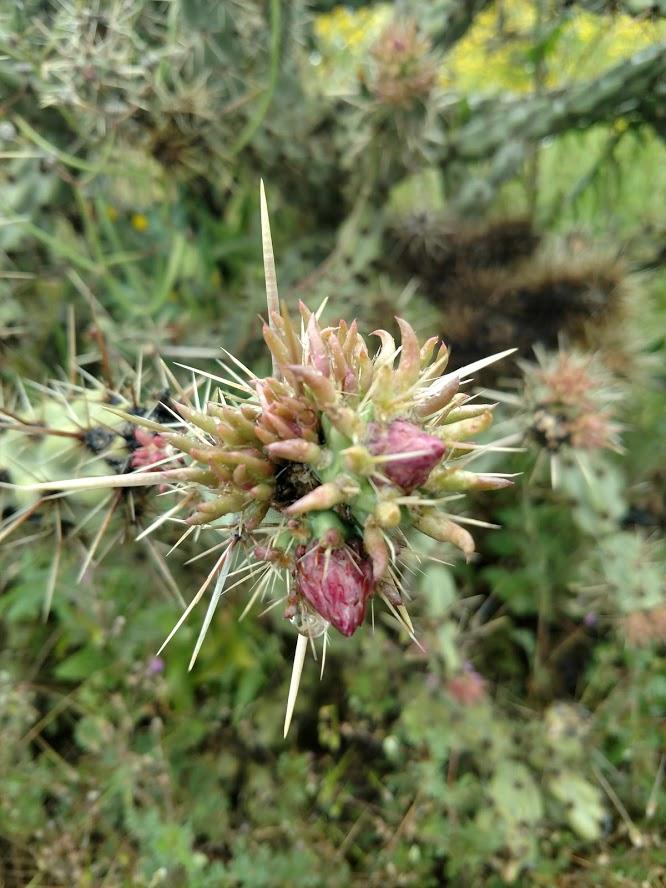 Botany Thread-img_20200318_150129244_burst001.jpg