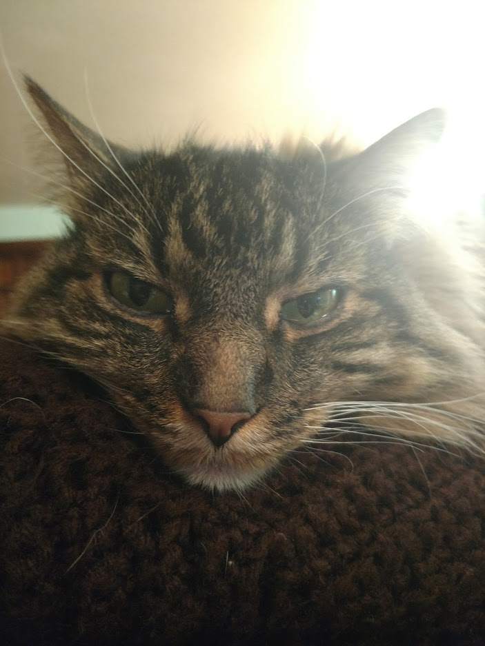 How my Cat feels about everyone being home all day everyday..-img_20200420_210039820_burst000_cover_top.jpg