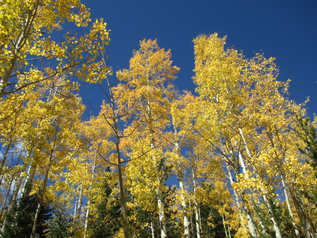 Flagstaff and Aspens turning color-img_2086.jpg