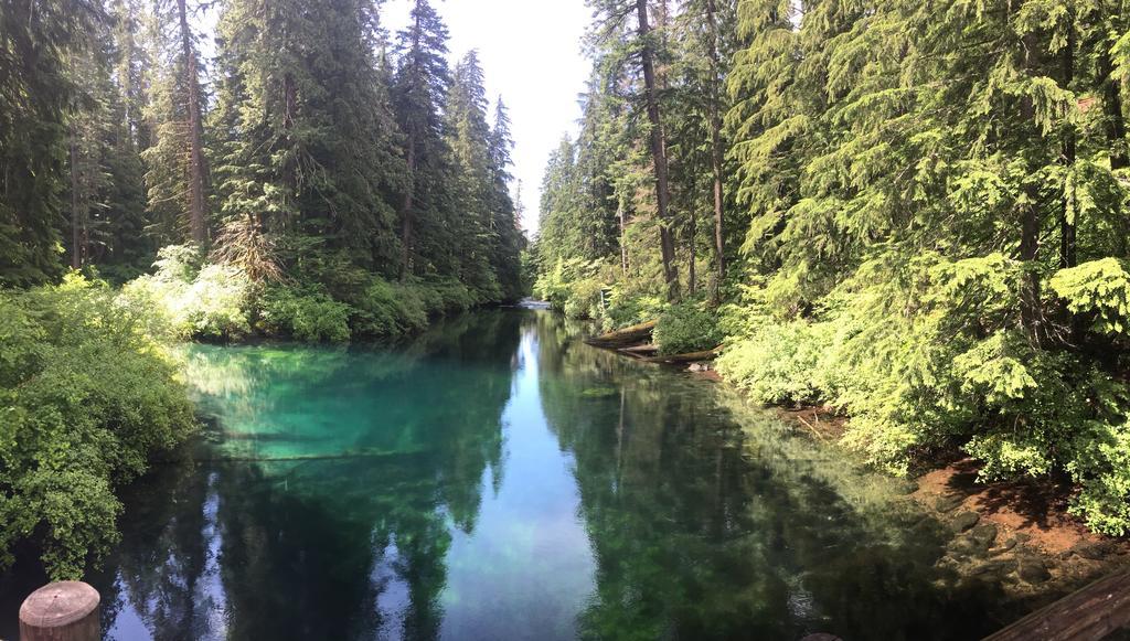 McKenzie River Trail this week-img_2104.jpg