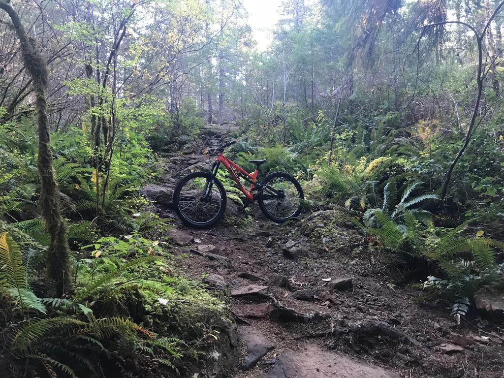 did you ride today?-img_2123-edited.jpg