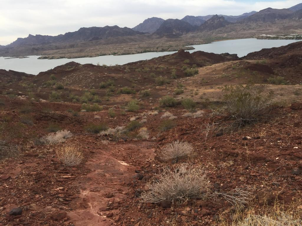 Looking for trail recommendations in Sara Park, Lake Havasu City-img_2208.jpg
