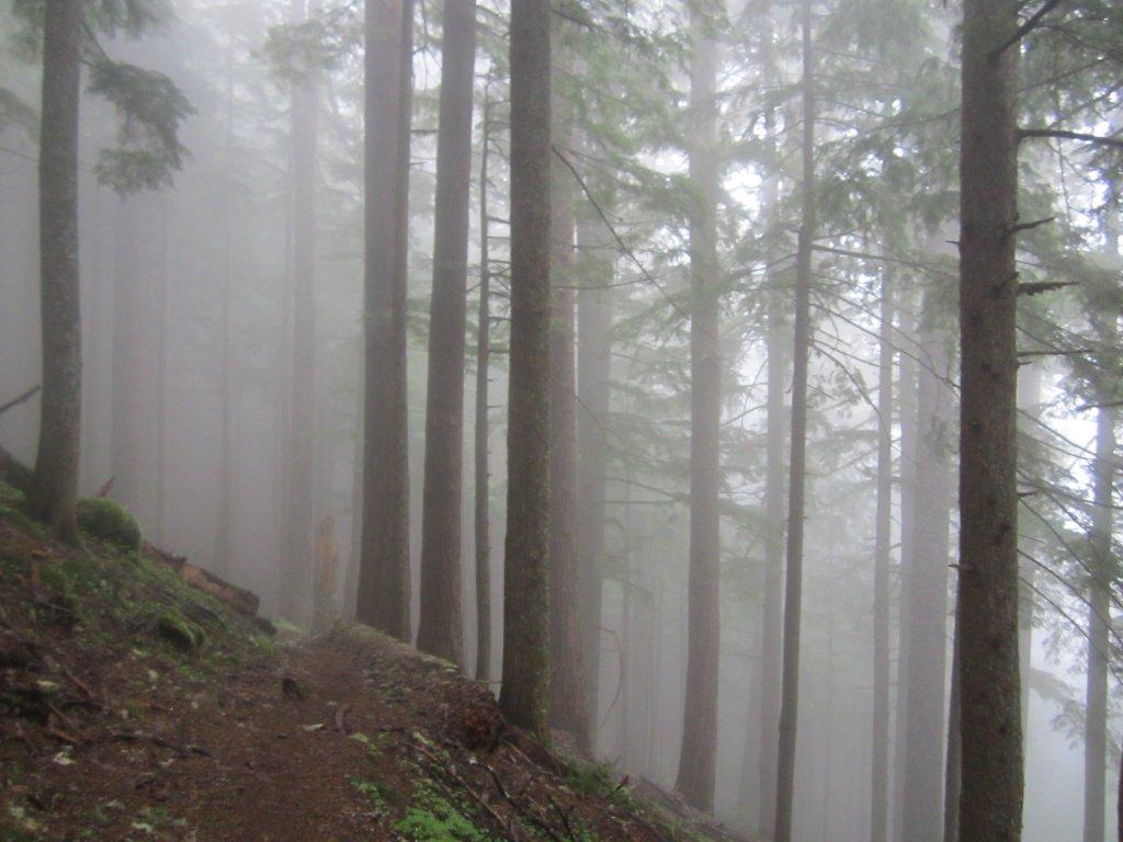 Mary's Peak-img_2210.jpg