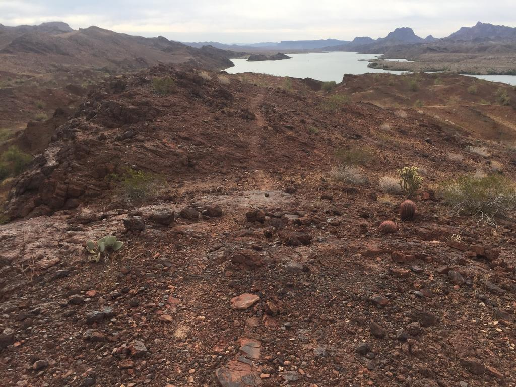 Looking for trail recommendations in Sara Park, Lake Havasu City-img_2215.jpg