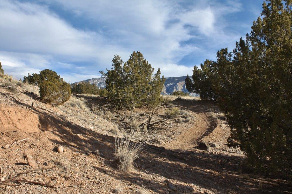 The NM Trail Pix Thread-img_2610.jpg