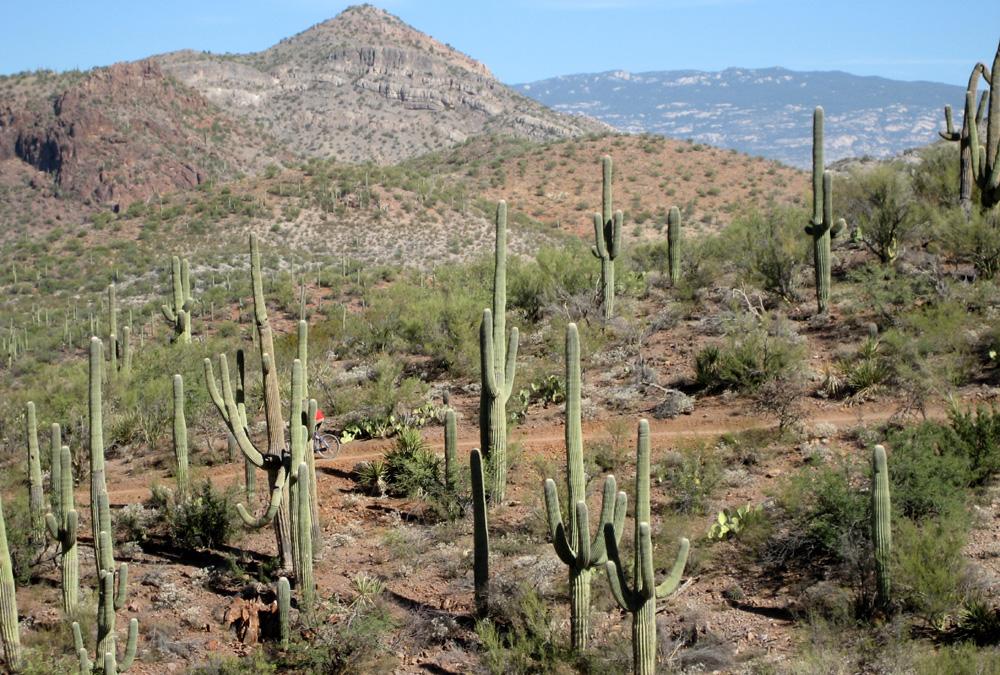 Trail Pics-img_2680rs.jpg