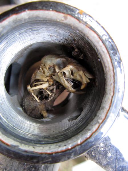 Santa Cruz Chameleon, errr.. rat trap-img_2806.jpg