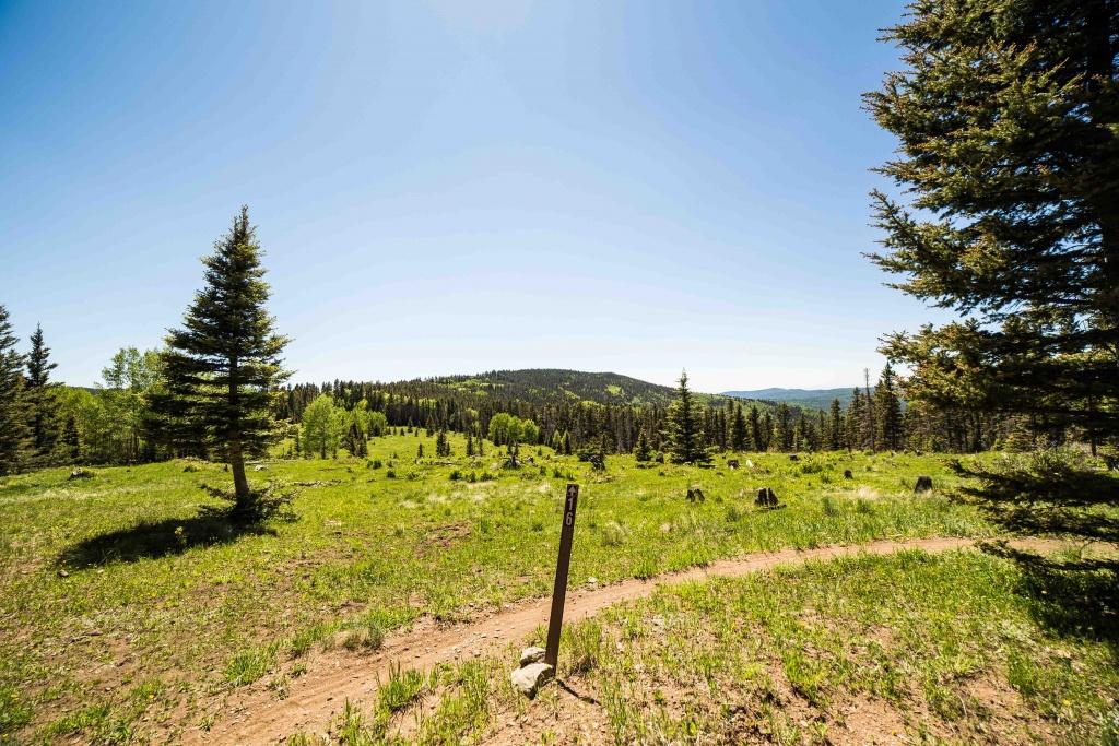 The NM Trail Pix Thread-img_2855-2.jpg
