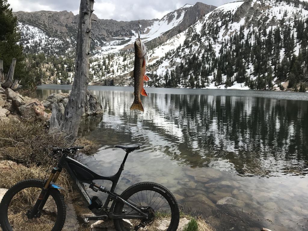 Tahoe Trails and Shuttles Status-img_2887.jpg