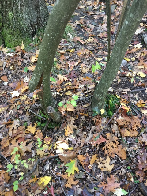 Ongoing trail vandalism, rogue trails at LLF and BBN-img_3010.jpg
