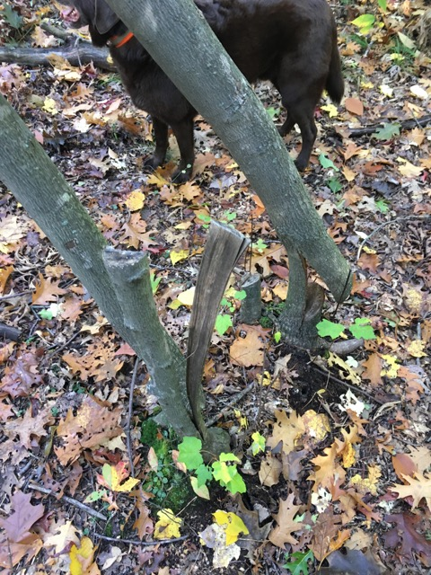 Ongoing trail vandalism, rogue trails at LLF and BBN-img_3012.jpg