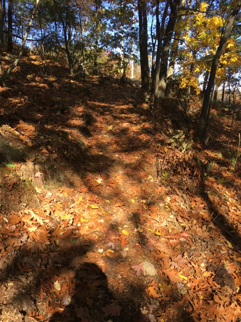 Ongoing trail vandalism, rogue trails at LLF and BBN-img_3014.jpg